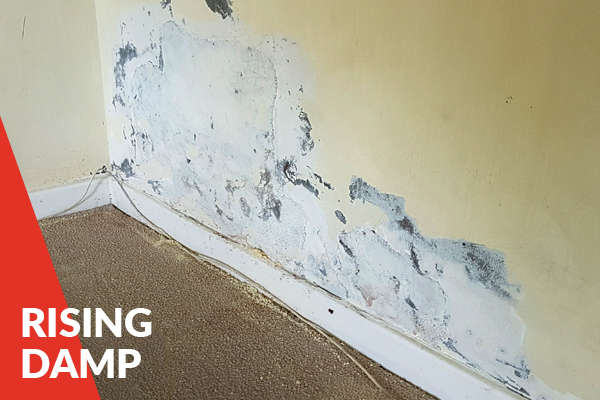 Rising Damp Services